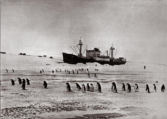 pinguinsWEB